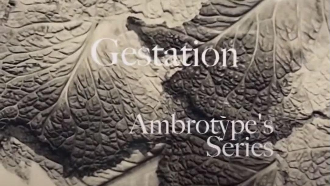 Ambrotypes Series Gestation.